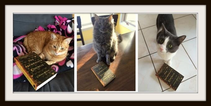 3 Cats 2 Matte