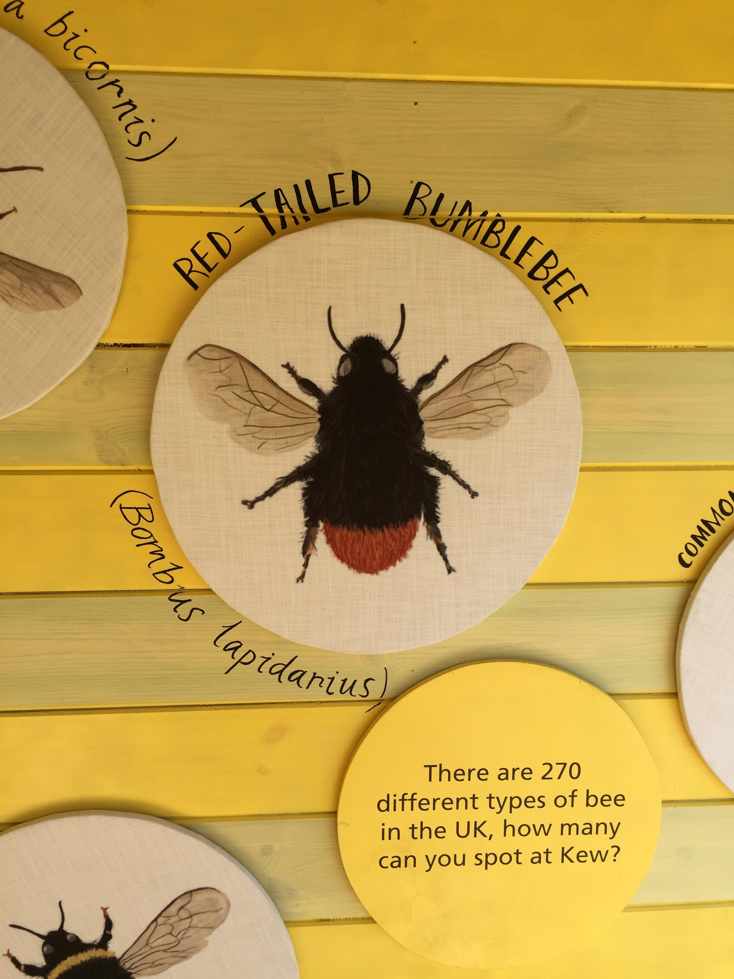 Bee Info