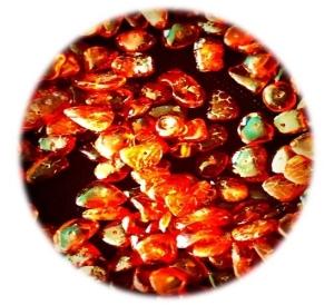 Amber Beads Round